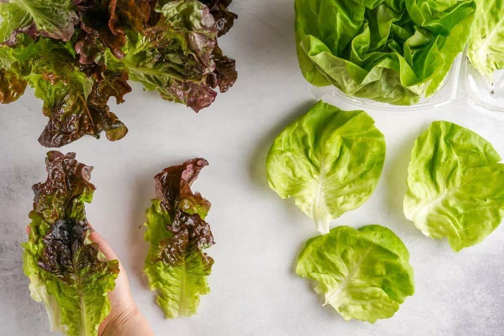 Types of Lettuce for Lettuce Wraps - Red Leaf and Butterhead